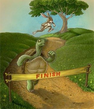 tortoise-hare-1